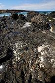 Salt sky light beach water in lanzarote isle foam — Stock Photo