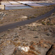 Salt in  lanzarote spain musk po  coastline and summer — ストック写真