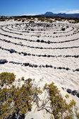 Spain hill white beach black rocks in the lanzarote — Stock Photo