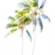 Africfront palm highlights — Stock Photo #36752207
