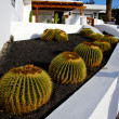 Cactus bush rock stone sky arrecife lanzarote — Stock Photo