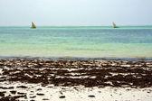 Costline boat pirague in the relax zanzibar africa — Stock Photo