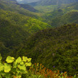 Stock Photo: Black river mountain in mauritius