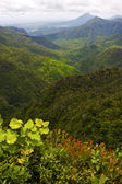 Black river mountain in mauritius — Stock Photo