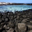 In lanzarote   pond  coastline and summer — Stock Photo