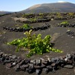 Viticulture winery lanzarote — Stock Photo #37052331