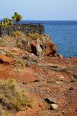Cactus chain hill coastline lanzarote — Stock Photo