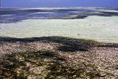 Foam the blue lagoon relax of zanzibar africa — Foto de Stock
