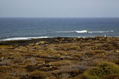 Surf coastline lanzarote in spain musk pond beach water — Stock Photo
