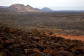 Bush timanfaya volcanes volcanic — Stock Photo