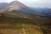 Winery lanzarote spain la crops viticulture — Stock Photo
