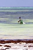 And seaweed  the  blue lagoon relax  of zanzibar africa — Stock Photo