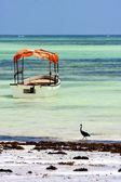 Boat pirague bird in the    of zanzibar  africa coastline  — 图库照片