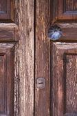 Latón aldaba y madera vidrio puerta caronno varesino varese — Foto de Stock