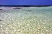 Africa coastline froth foam  in the   relax  of zanzibar  — Stockfoto