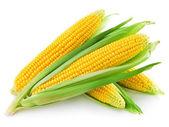 Ett öra av majs isolerad på en vit bakgrund — Stockfoto