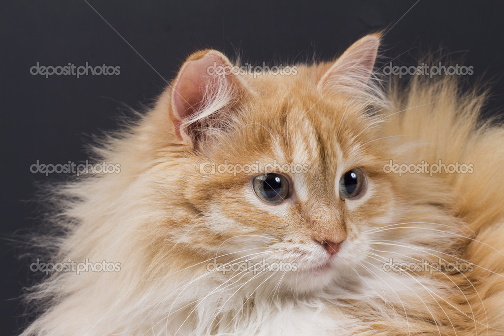 Cat on the white background — Stock Photo #21287417