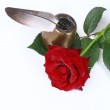 Rose on the white background — Stock Photo #43607293