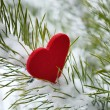 Red heart in pine needles covered with snow - Stockfoto