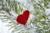 Red heart in pine needles covered with snow — Stock Photo