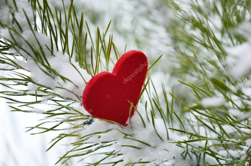 Red heart in pine branches covered with deep snow  Stock Photo #19471491