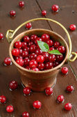 Wild cranberries in little brass bucket — Stock Photo