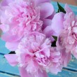 Bunch of peony on shabby blue chair — Stock Photo #25896955