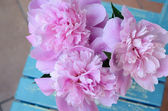 Bunch of peony on shabby blue chair — Foto Stock