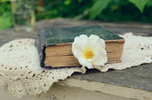Old book and dog rose flower — Stock Photo