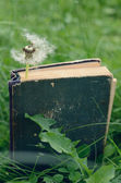 White dandelion and vintage book — Stock Photo