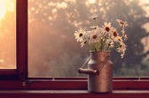 Daisy on windowsill — Stock Photo