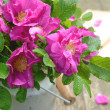 Wild rose bouquet in old milk churn — Stock Photo #28842543