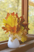 осенью кленовые листья пучок — Стоковое фото