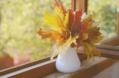 Autumn maple leaves bunch — Stock Photo