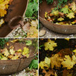 Vintage metal bowl and fallen maple leaves set — Stock Photo