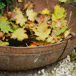 Vintage rusty bowl with fallen yellow maple leaves — Stock Photo #31001773