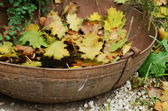 Vintage rusty bowl with fallen yellow maple leaves — Stock Photo