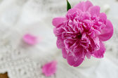 Pink peony in jug on vintage lace tablecloth — Stock Photo