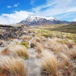 Stock Photo: Mt. Ruapehu, Tongariro national park, New Zealand