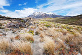 Mt. Ruapehu, Tongariro national park, New Zealand — Stock Photo