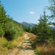 Walkways in Krkonose mountains, Czech republic - Stock Photo