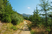 Walkways in Krkonose mountains, Czech republic — Stock Photo