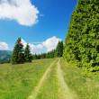 Countryside in Krkonose mountains, Czech republic — Stock Photo