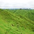 Foto de Stock  : Typical New Zealand landscape