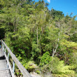 Stock Photo: Tramping in Abel Tasmnational park, New Zealand