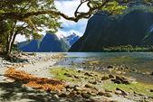 Milford Sound, New Zealand — Stock Photo