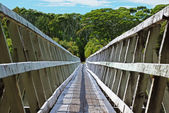 Percy Burn viaduct, New Zealand — Stock Photo