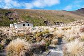 在新西兰徒步旅行 — 图库照片