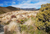 Trekking in New Zealand — Foto Stock