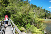 Tramping in Abel Tasman national park, New Zealand — Stock Photo